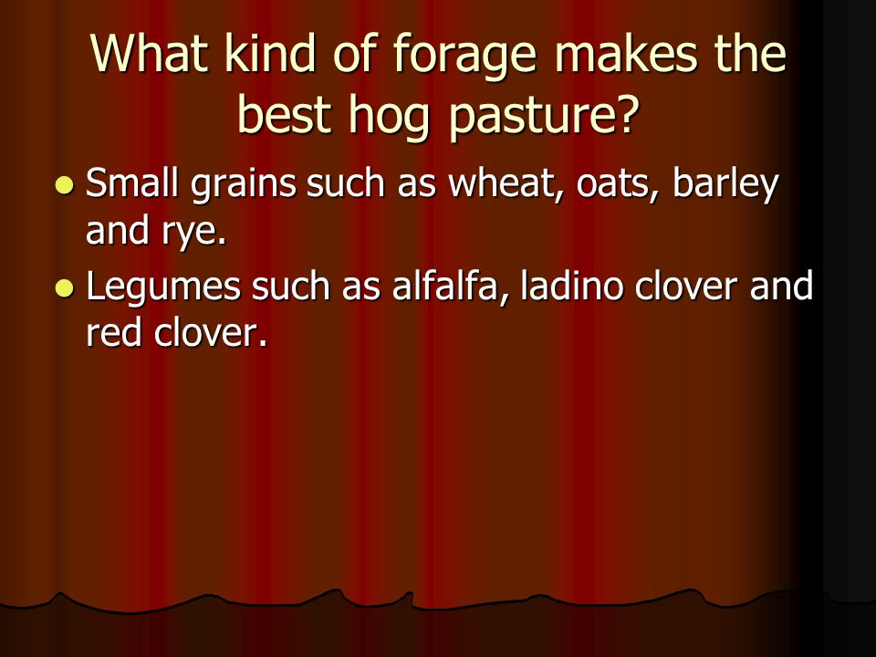 What kind of forage makes the best hog pasture? Small grains such as wheat, oats, barley and rye. Small grains such as wheat, oats, barley and rye. Le