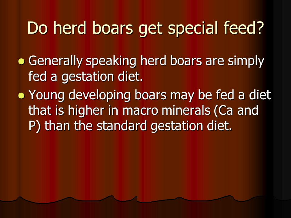 Do herd boars get special feed? Generally speaking herd boars are simply fed a gestation diet. Generally speaking herd boars are simply fed a gestatio