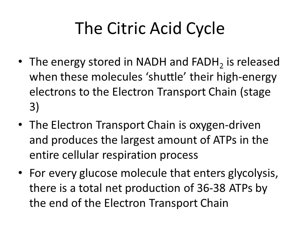 The Citric Acid Cycle The energy stored in NADH and FADH 2 is released when these molecules 'shuttle' their high-energy electrons to the Electron Tran