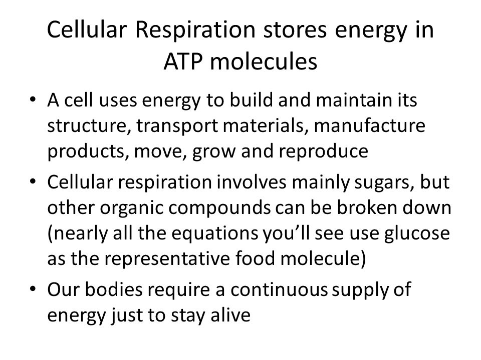 Cellular Respiration stores energy in ATP molecules A cell uses energy to build and maintain its structure, transport materials, manufacture products,