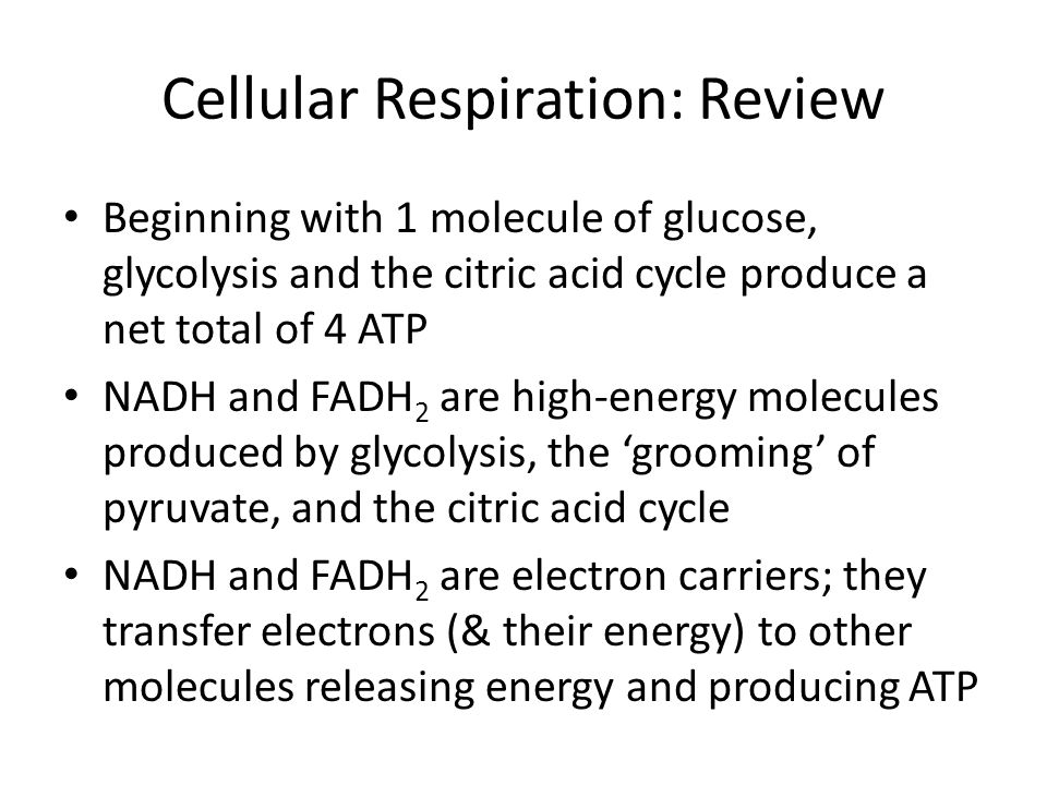 Cellular Respiration: Review Beginning with 1 molecule of glucose, glycolysis and the citric acid cycle produce a net total of 4 ATP NADH and FADH 2 a