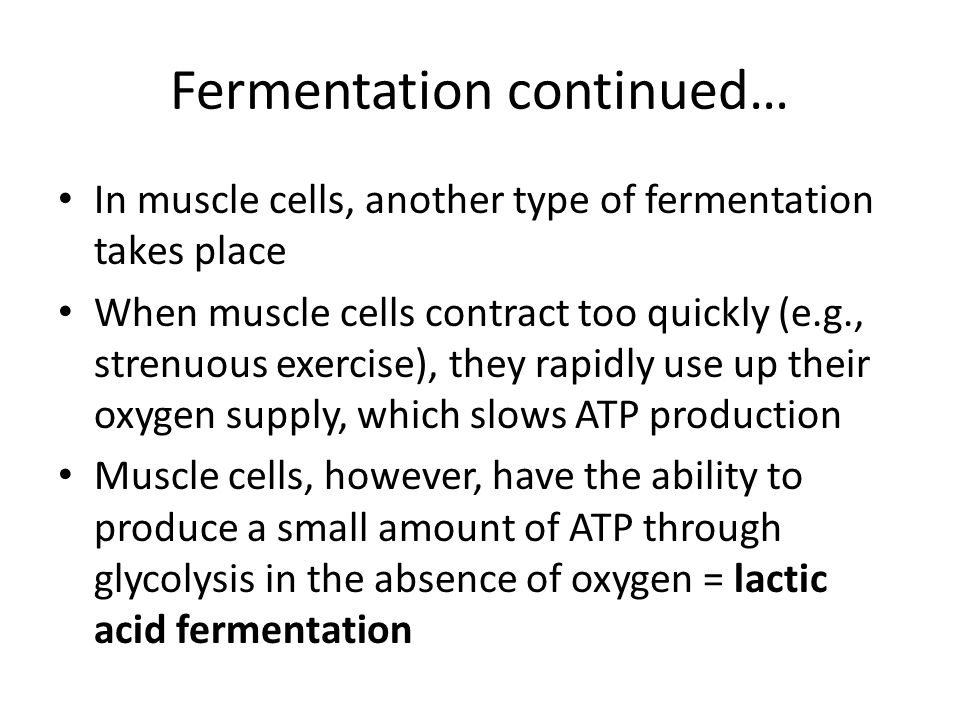 Fermentation continued… In muscle cells, another type of fermentation takes place When muscle cells contract too quickly (e.g., strenuous exercise), t