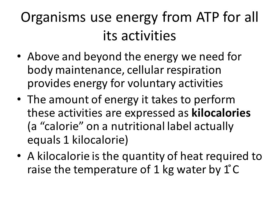 Organisms use energy from ATP for all its activities Above and beyond the energy we need for body maintenance, cellular respiration provides energy fo