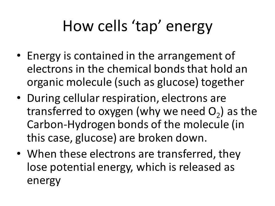 Brown phat Brown fat has extremely high numbers of mitochondria One of the steps in the Electron Transport Chain involves the transfer of hydrogen ions (H + ) across the mitochondrial inner membrane which stores energy as a proton (H + ) gradient This energy is used to make ATP