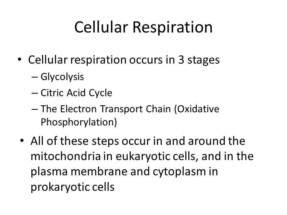 Cellular Respiration Cellular respiration occurs in 3 stages – Glycolysis – Citric Acid Cycle – The Electron Transport Chain (Oxidative Phosphorylatio