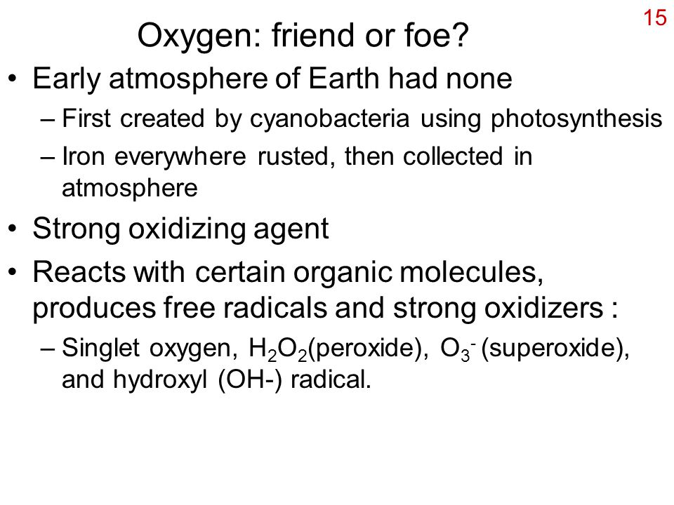 15 Oxygen: friend or foe? Early atmosphere of Earth had none –First created by cyanobacteria using photosynthesis –Iron everywhere rusted, then collec
