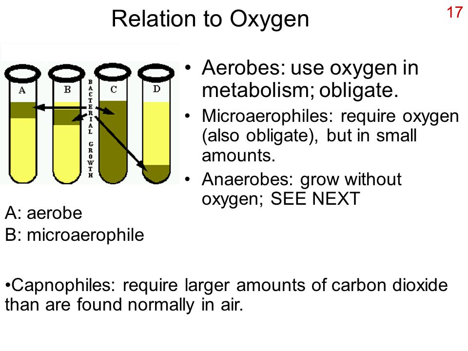17 Relation to Oxygen Aerobes: use oxygen in metabolism; obligate. Microaerophiles: require oxygen (also obligate), but in small amounts. Anaerobes: g