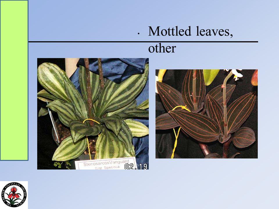 Mottled leaves, other