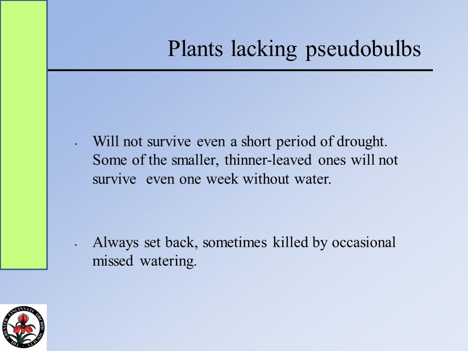 Plants lacking pseudobulbs Will not survive even a short period of drought.