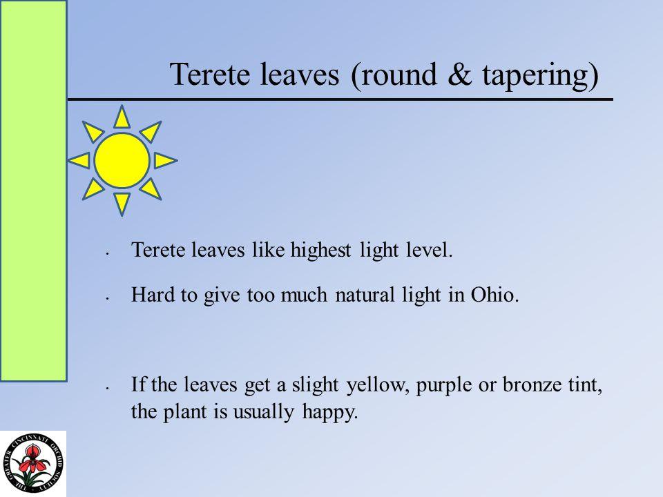 Terete leaves (round & tapering) Terete leaves like highest light level.