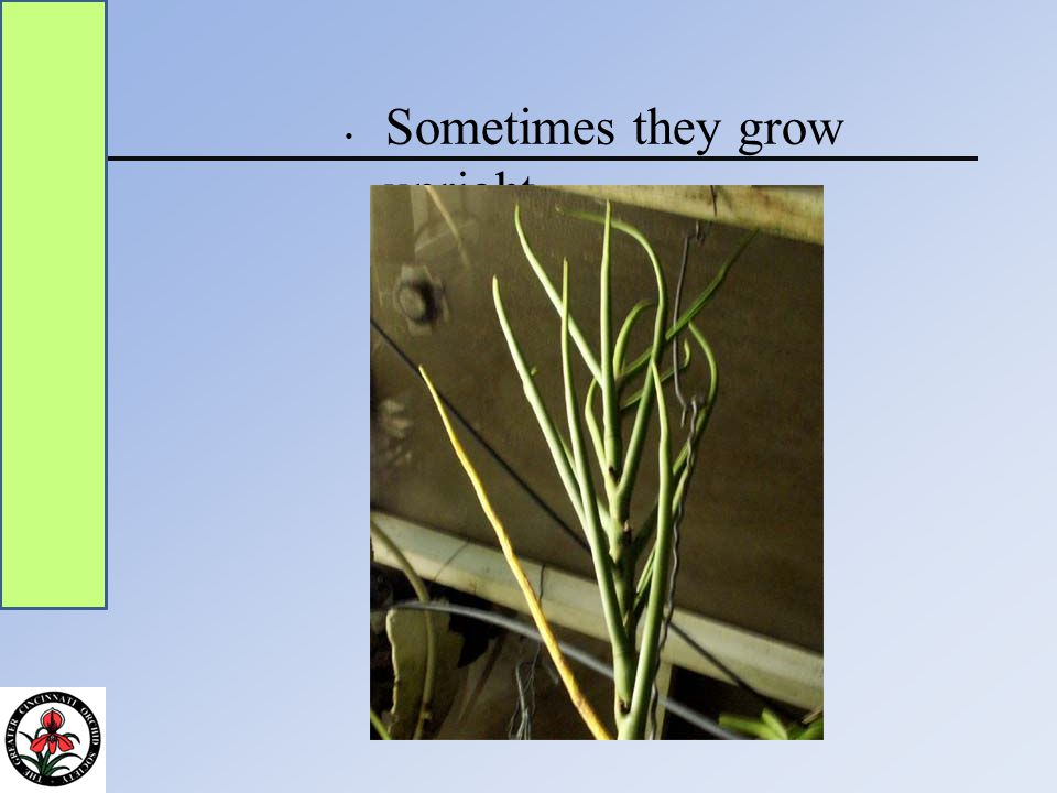 Sometimes they grow down
