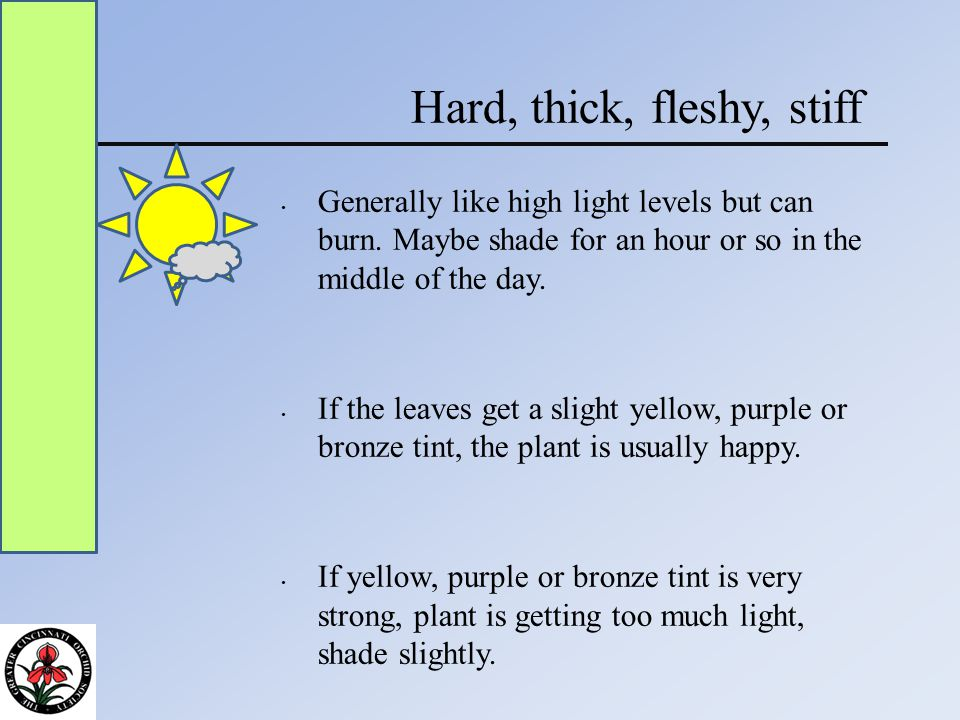 Hard, thick, fleshy, stiff Generally like high light levels but can burn.