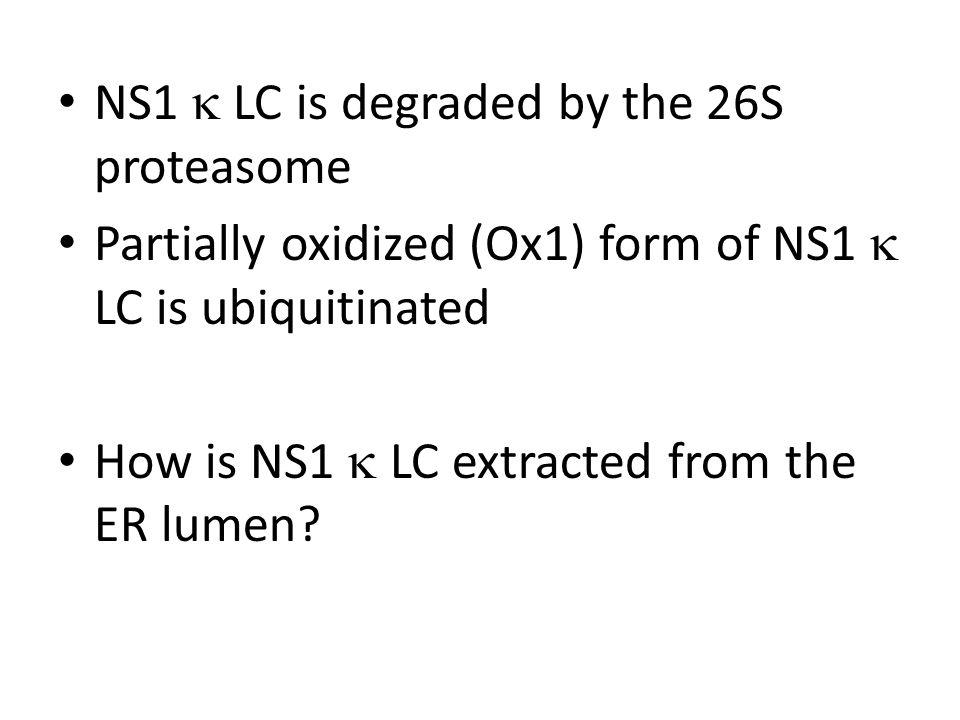 NS1  LC is degraded by the 26S proteasome Partially oxidized (Ox1) form of NS1  LC is ubiquitinated How is NS1  LC extracted from the ER lumen