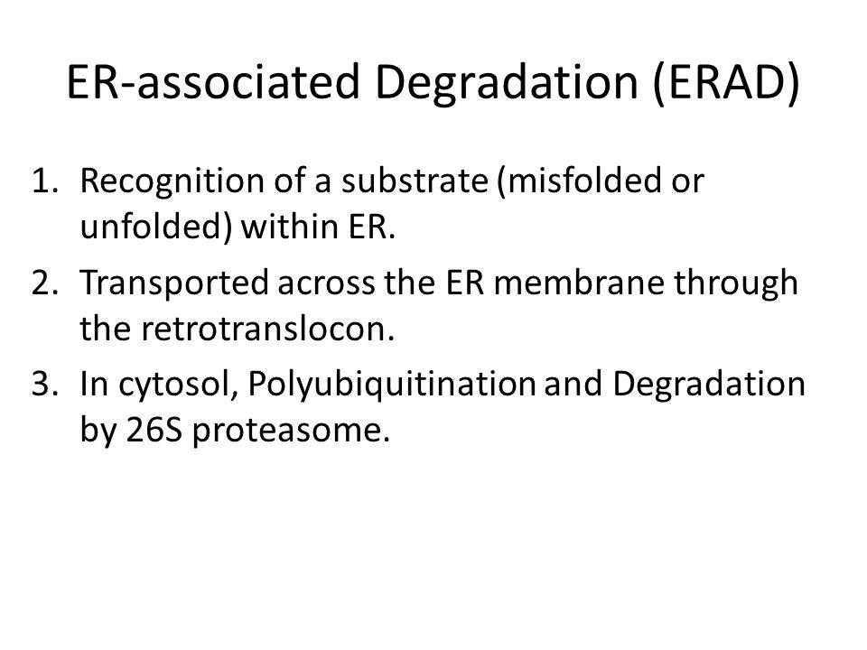 ER-associated Degradation (ERAD) 1.Recognition of a substrate (misfolded or unfolded) within ER. 2.Transported across the ER membrane through the retr
