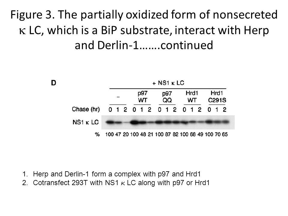 Figure 3. The partially oxidized form of nonsecreted  LC, which is a BiP substrate, interact with Herp and Derlin-1…….continued 1.Herp and Derlin-1 f