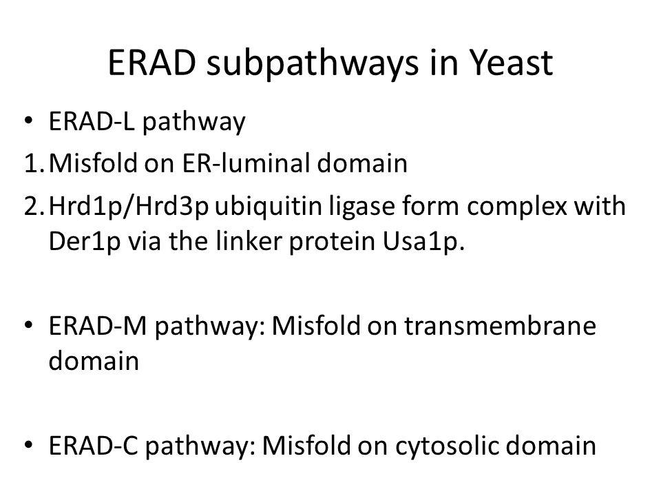 ERAD subpathways in Yeast ERAD-L pathway 1.Misfold on ER-luminal domain 2.Hrd1p/Hrd3p ubiquitin ligase form complex with Der1p via the linker protein Usa1p.