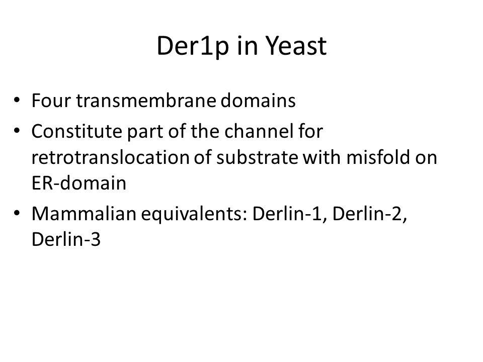Der1p in Yeast Four transmembrane domains Constitute part of the channel for retrotranslocation of substrate with misfold on ER-domain Mammalian equiv