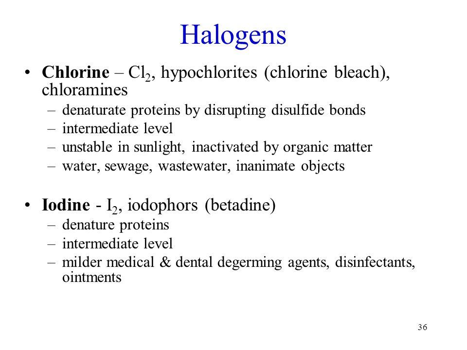 36 Halogens Chlorine – Cl 2, hypochlorites (chlorine bleach), chloramines –denaturate proteins by disrupting disulfide bonds –intermediate level –unst