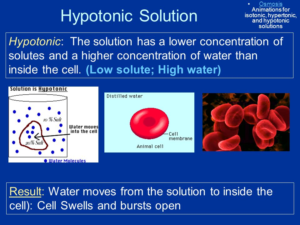 Hypotonic Solution Hypotonic: The solution has a lower concentration of solutes and a higher concentration of water than inside the cell. (Low solute;