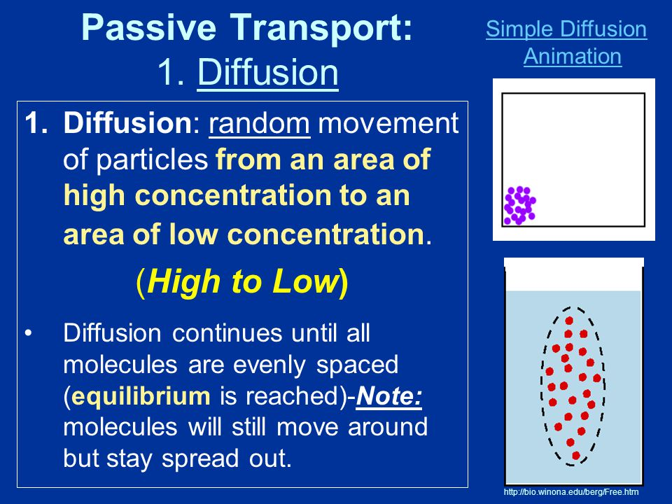 Passive Transport: 1. Diffusion 1.Diffusion: random movement of particles from an area of high concentration to an area of low concentration. (High to