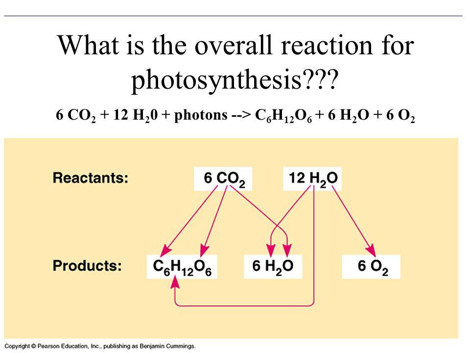 6 CO 2 + 12 H 2 0 + photons --> C 6 H 12 O 6 + 6 H 2 O + 6 O 2
