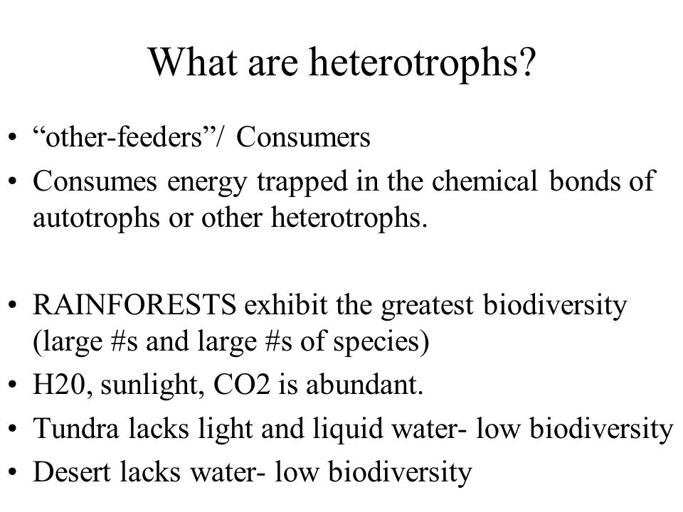 """What are heterotrophs? """"other-feeders""""/ Consumers Consumes energy trapped in the chemical bonds of autotrophs or other heterotrophs. RAINFORESTS exhib"""
