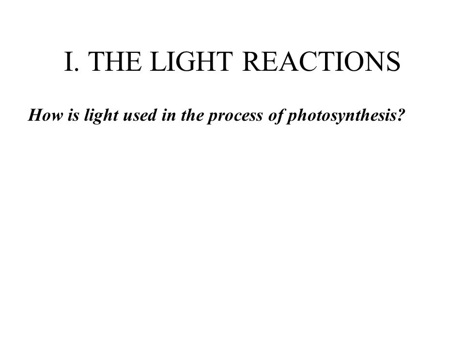 I. THE LIGHT REACTIONS How is light used in the process of photosynthesis?