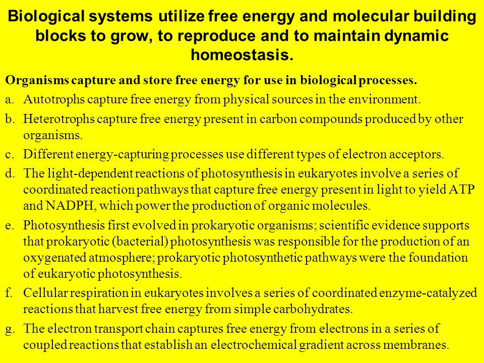 Biological systems utilize free energy and molecular building blocks to grow, to reproduce and to maintain dynamic homeostasis. Organisms capture and