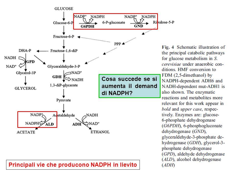 Principali vie che producono NADPH in lievito Cosa succede se si aumenta il demand di NADPH?
