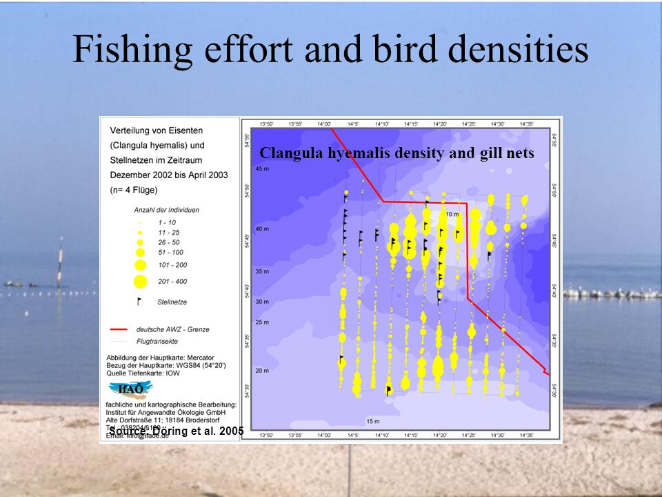Fishing effort and bird densities Clangula hyemalis density and gill nets Source: Döring et al.