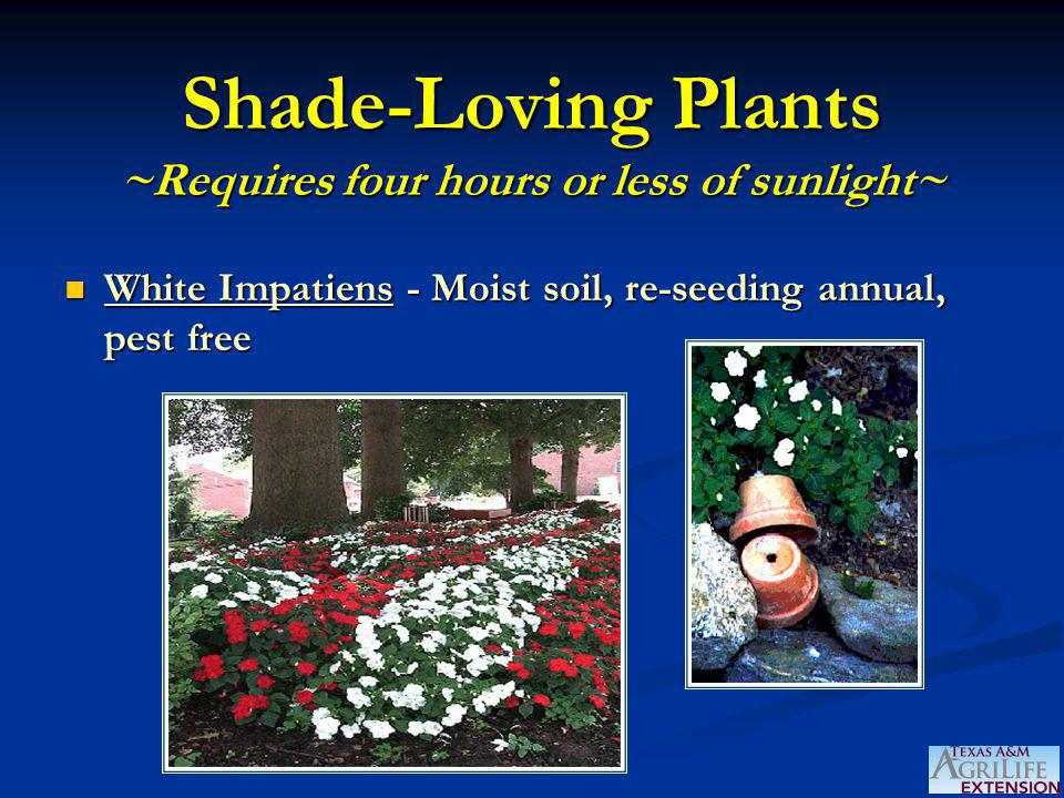 Shade-Loving Plants ~Requires four hours or less of sunlight~ White Impatiens - Moist soil, re-seeding annual, pest free White Impatiens - Moist soil, re-seeding annual, pest free