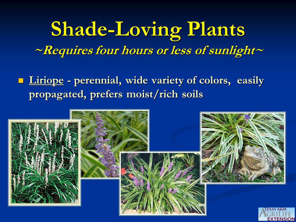 Shade-Loving Plants ~Requires four hours or less of sunlight~ Liriope - perennial, wide variety of colors, easily propagated, prefers moist/rich soils Liriope - perennial, wide variety of colors, easily propagated, prefers moist/rich soils