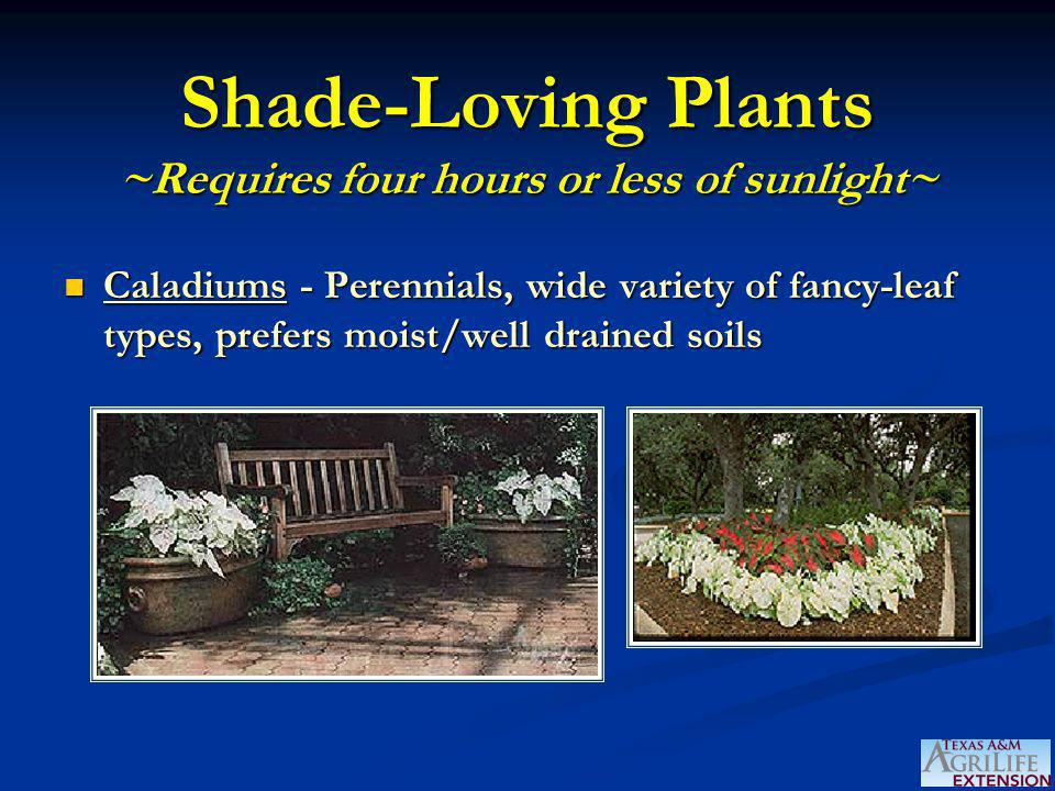 Shade-Loving Plants ~Requires four hours or less of sunlight~ Caladiums - Perennials, wide variety of fancy-leaf types, prefers moist/well drained soi