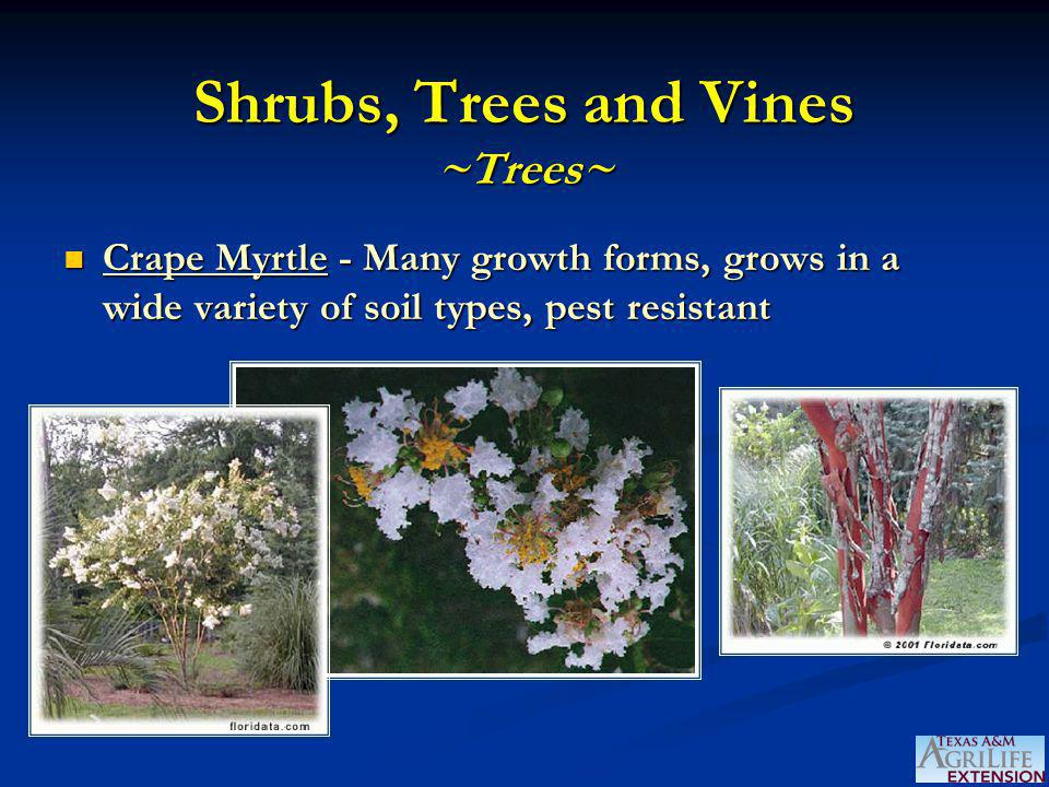 Shrubs, Trees and Vines ~Trees~ Crape Myrtle - Many growth forms, grows in a wide variety of soil types, pest resistant Crape Myrtle - Many growth forms, grows in a wide variety of soil types, pest resistant