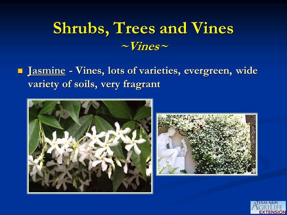 Shrubs, Trees and Vines ~Vines~ Jasmine - Vines, lots of varieties, evergreen, wide variety of soils, very fragrant Jasmine - Vines, lots of varieties
