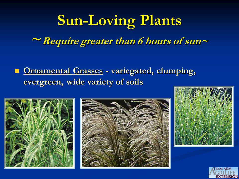 Sun-Loving Plants ~ Require greater than 6 hours of sun~ Ornamental Grasses - variegated, clumping, evergreen, wide variety of soils Ornamental Grasse