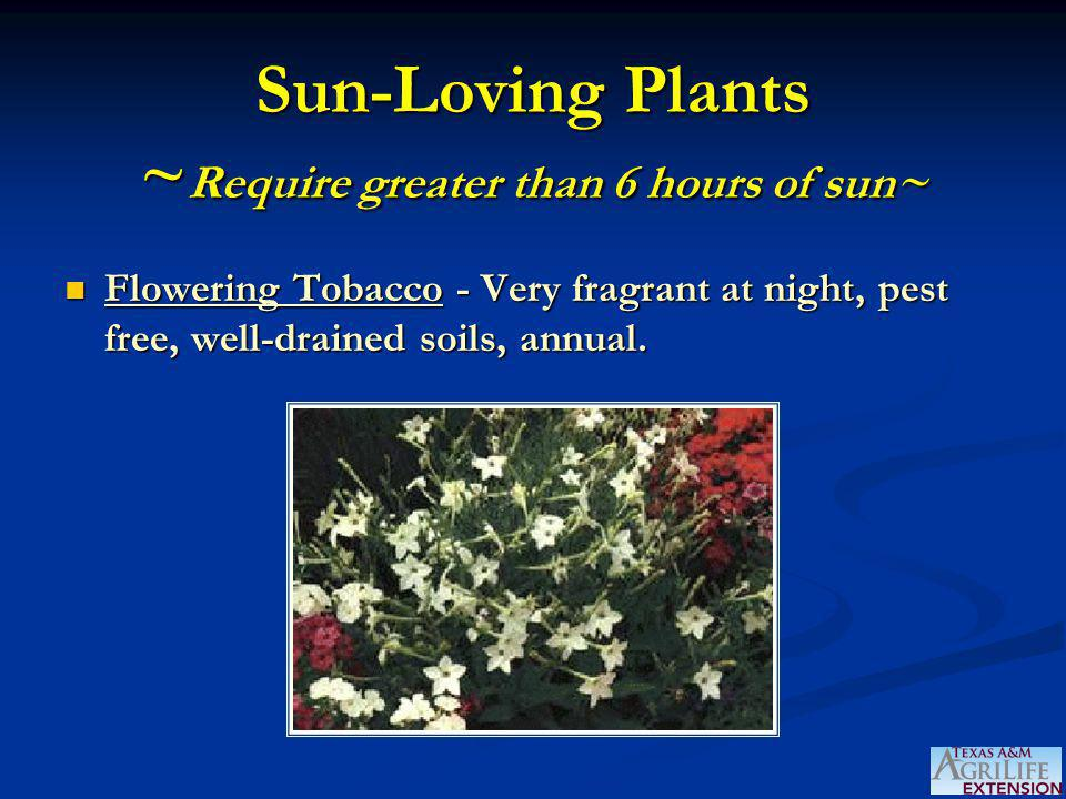 Sun-Loving Plants ~ Require greater than 6 hours of sun~ Flowering Tobacco - Very fragrant at night, pest free, well-drained soils, annual. Flowering