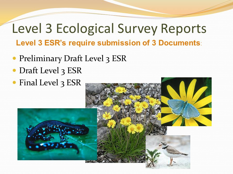 Level 3 Ecological Survey Reports Preliminary Draft Level 3 ESR Draft Level 3 ESR Final Level 3 ESR Level 3 ESR's require submission of 3 Documents :
