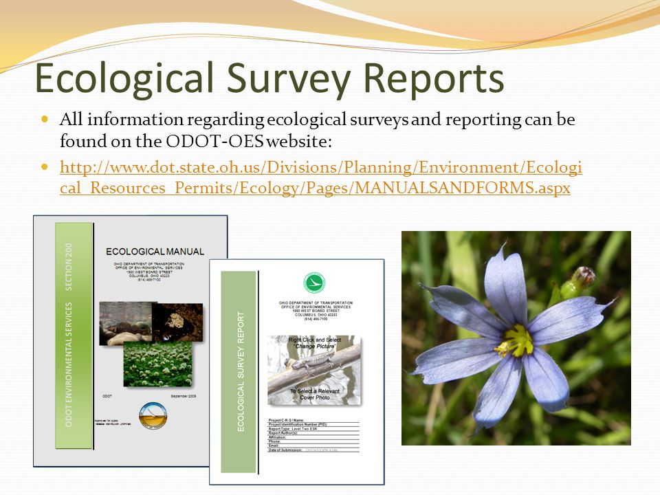 Ecological Survey Reports All information regarding ecological surveys and reporting can be found on the ODOT-OES website: http://www.dot.state.oh.us/Divisions/Planning/Environment/Ecologi cal_Resources_Permits/Ecology/Pages/MANUALSANDFORMS.aspx http://www.dot.state.oh.us/Divisions/Planning/Environment/Ecologi cal_Resources_Permits/Ecology/Pages/MANUALSANDFORMS.aspx