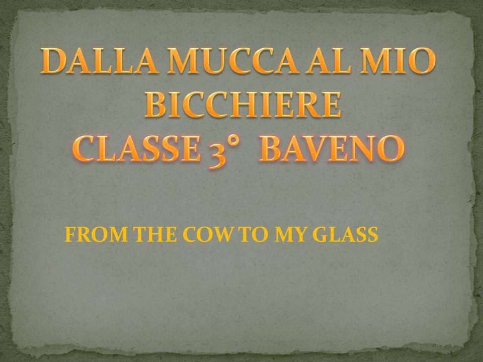 LA MUCCA PASCOLA E PRODUCE IL LATTE The cow eats grass and produces milk