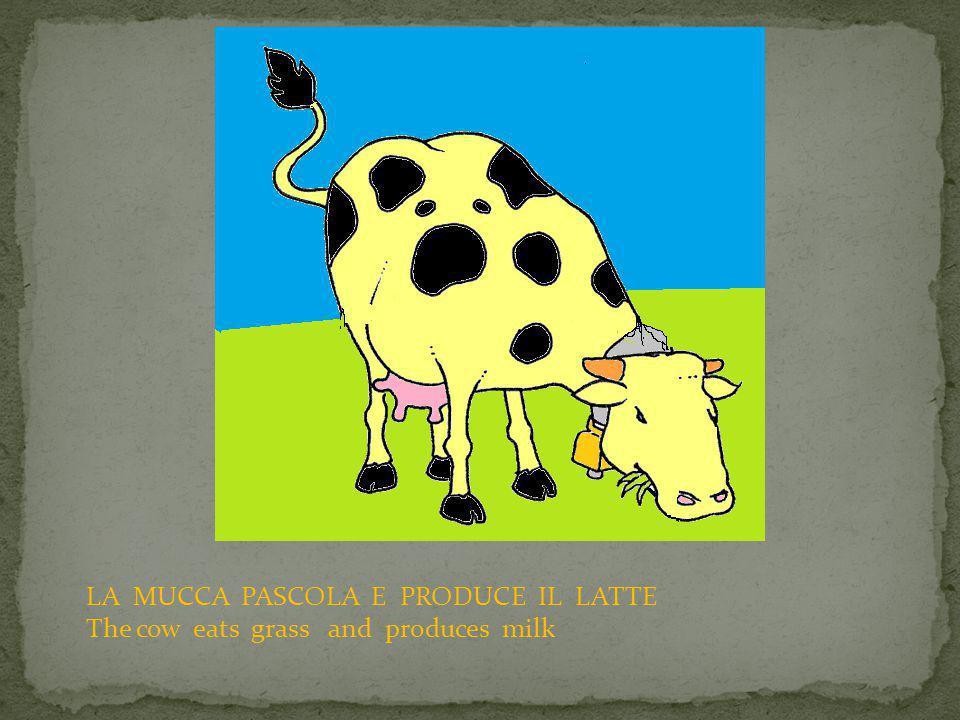 IL CONTADINO MUNGE LA MUCCA E PRODUCE IL LATTE The farmer takes the milk from the cow