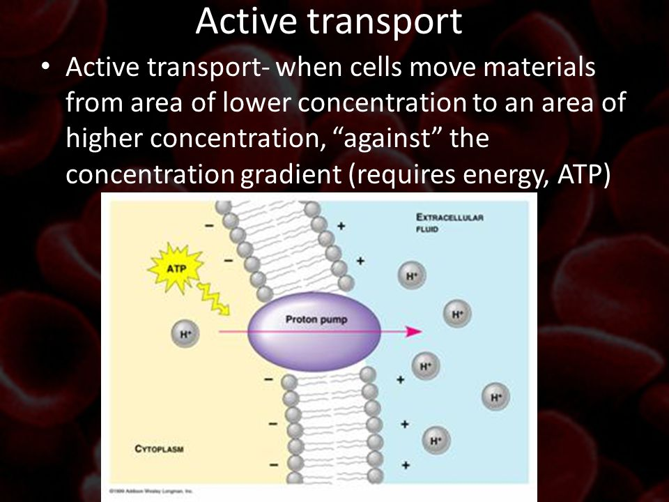 """Active transport Active transport- when cells move materials from area of lower concentration to an area of higher concentration, """"against"""" the concen"""
