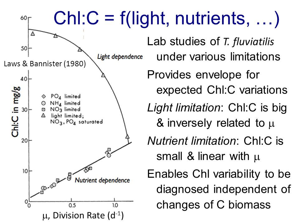 Laws & Bannister (1980) , Division Rate (d -1 ) Chl:C = f(light, nutrients, …) Lab studies of T.