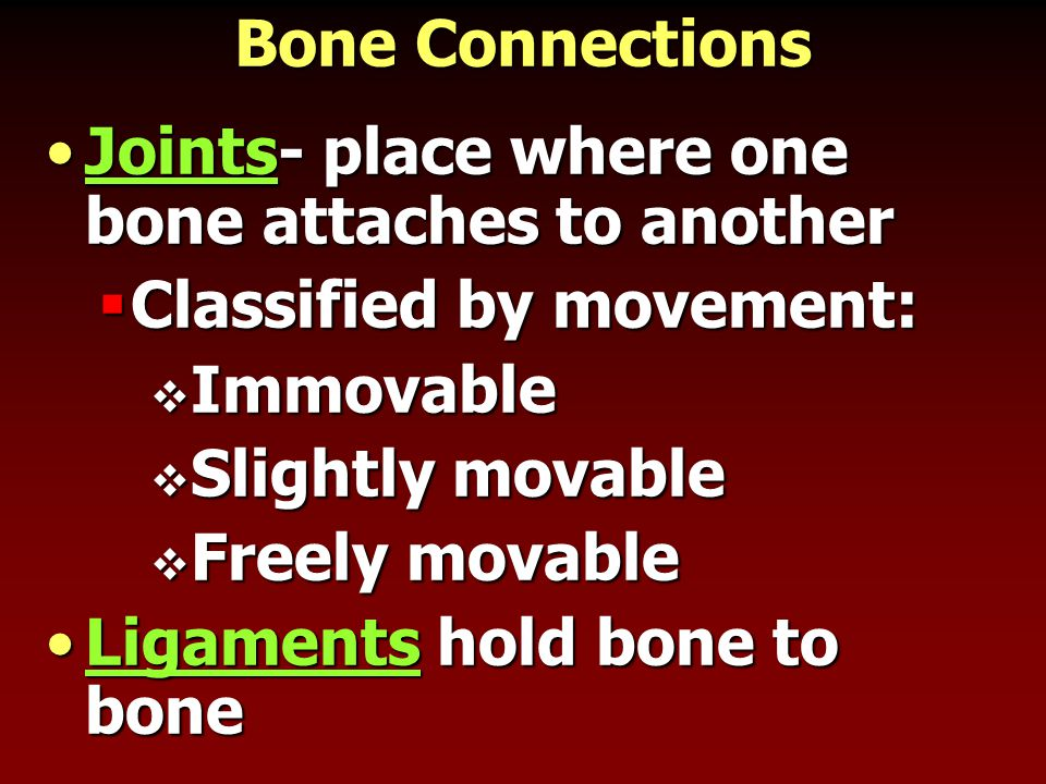 Bone Connections Joints- place where one bone attaches to anotherJoints- place where one bone attaches to another  Classified by movement:  Immovabl