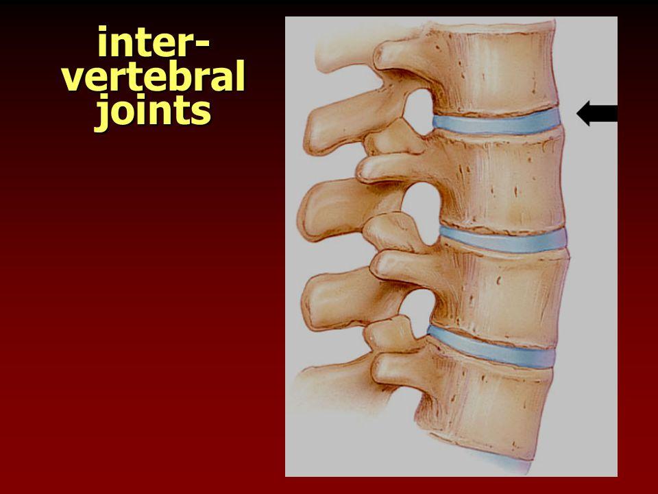 inter- vertebral joints