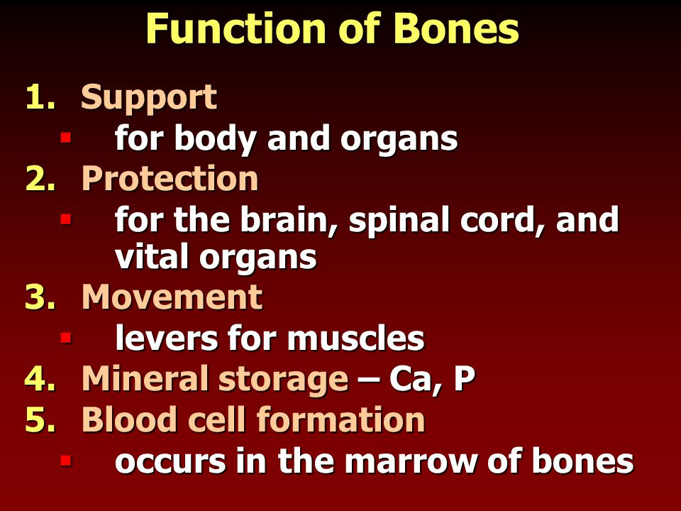 Function of Bones 1.Support  for body and organs 2.Protection  for the brain, spinal cord, and vital organs 3.Movement  levers for muscles 4.Minera