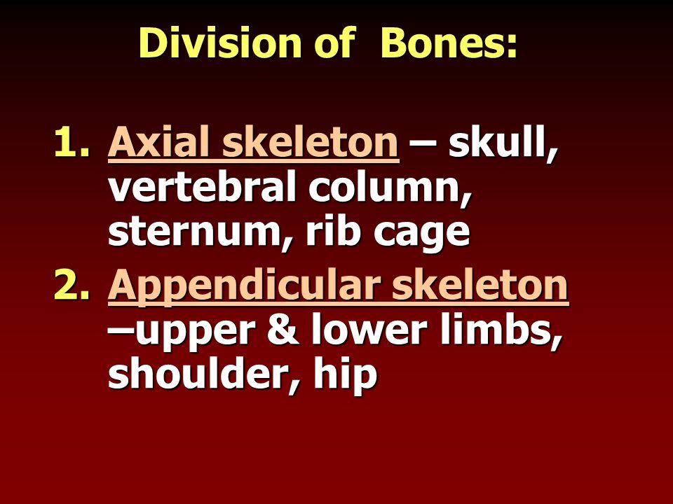 Division of Bones: 1.Axial skeleton – skull, vertebral column, sternum, rib cage 2.Appendicular skeleton –upper & lower limbs, shoulder, hip