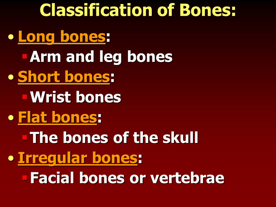 Bone Connections Joints- place where one bone attaches to anotherJoints- place where one bone attaches to another  Classified by movement:  Immovable  Slightly movable  Freely movable Ligaments hold bone to boneLigaments hold bone to bone