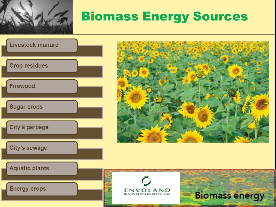 Biomass Energy Sources Livestock manureCrop residuesFirewoodSugar cropsCity s garbageCity's sewageAquatic plantsEnergy crops