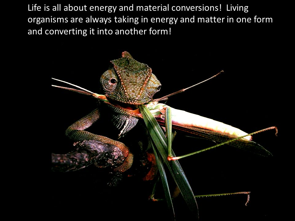 Life is all about energy and material conversions.